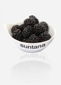 suntana-solutions